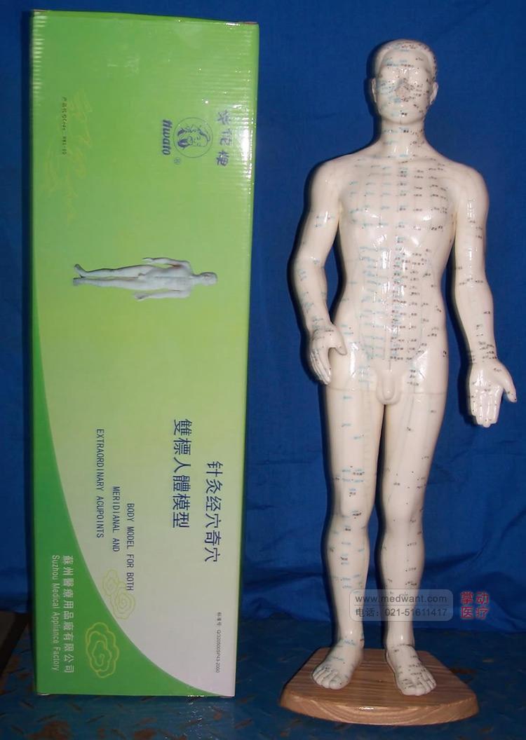 华佗 针灸人体模型 50cm