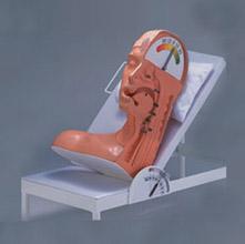 吞咽机制模型 KAS-86