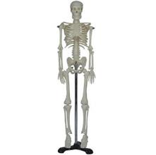 人体骨骼模型 KAR/11101-3