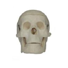 儿童头颅骨模型 KAR/1114