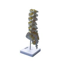 腰椎模型 KAR/11109