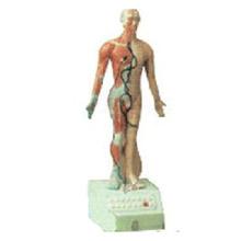 电动语言十四针灸模型 高85cm