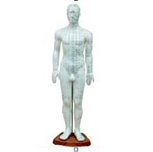 人体针灸模型 50cm