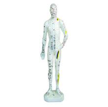 人体针灸模型 26cm
