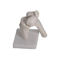 膝关节模型 KAR/111201-5