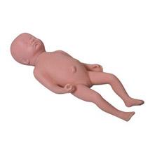 高级足月胎儿模型 KAR/Y1
