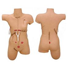 外科缝合包扎展示模型 KAR/LV18