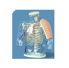 高级上臂肌肉注射及对比模型(带检测警示系统) KAR/H30