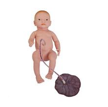 高级新生儿脐带胎盘护理模型 KAR/132
