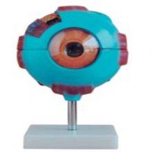 眼球放大模型 BIX-A1052