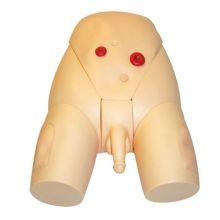 高级整体男性导尿模型 KAS-E1模型的逼真程度就像在真实的患者身上操作一样