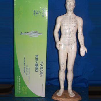 华佗针灸人体模型50cm 塑料男模