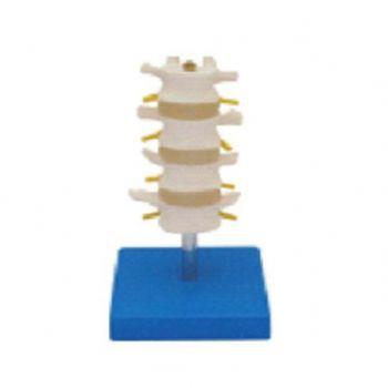 正常腰椎组合KAR/11109-3